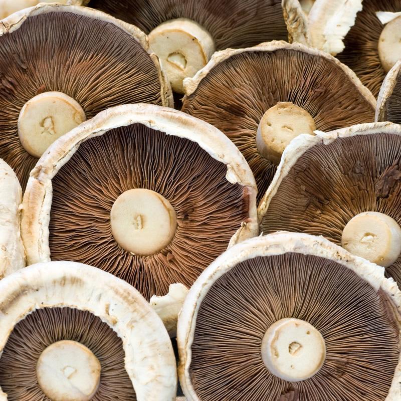 Flat Mushrooms